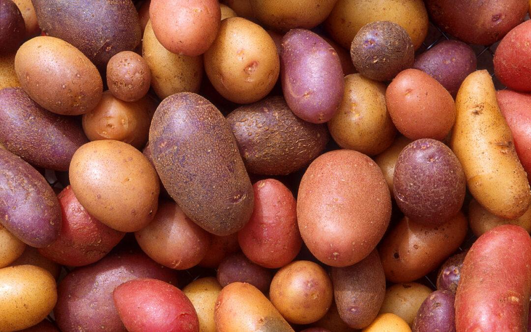 Kartoffel Reportage